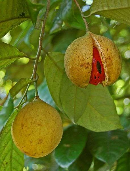 Nutmeg helps ease muscle spasm and reduce pain.