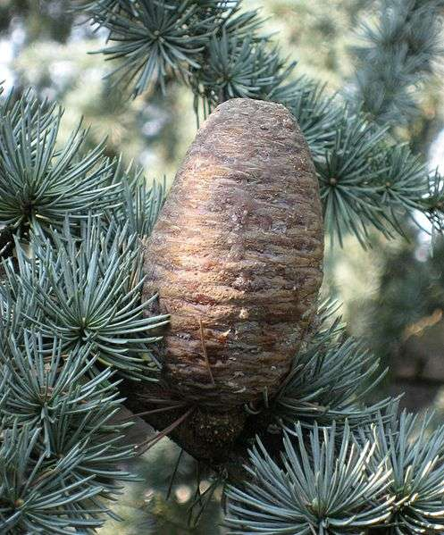 Cedar naturally kills fungus and repels insects, including fleas and lice.